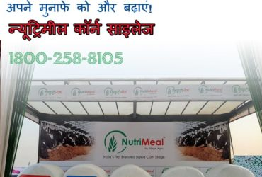 Increase Buffalo Milk Production