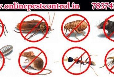 Pest control in zirakpur | Termite Pest Control in Chandigarh