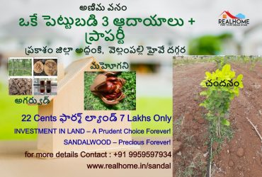 22 cents Sandalwood Plantation Plots in Addanki,Prakasam district for 7 lakhs