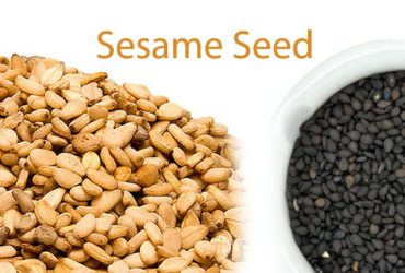 Sesame Seed producer in gujarat