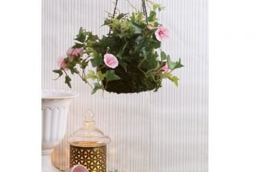 Get best quality of hanging plant pots at wooden street