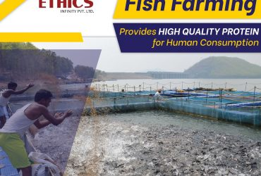 Aquaculture Fish Farming Company In India