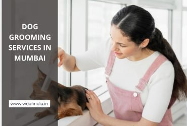 Dog Grooming in Mumbai